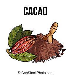 madeira, cacau, concha, fruta, pó, montão, cacao