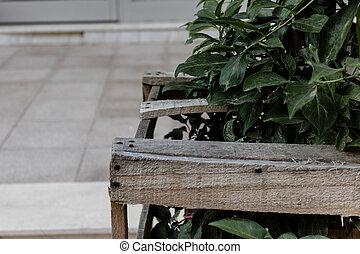 madeira, cercas, feito, para, proteção, de, planta