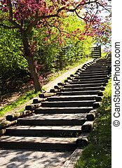 madeira, escadaria, em, um, parque