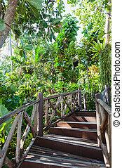 madeira, escadaria, selva