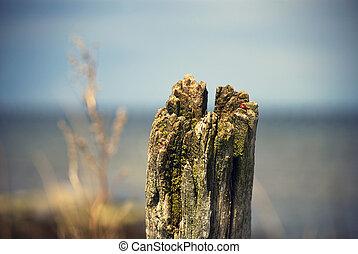 madeira, estaca
