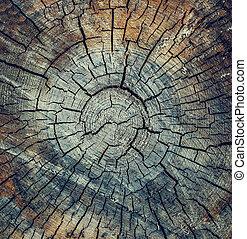 madeira, fenda, textura