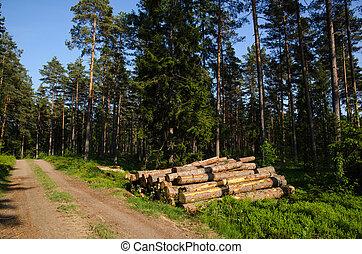madeira, floresta verde, pilha
