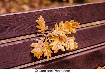 madeira, folhas, park., carvalho, banco