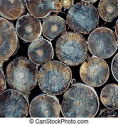 madeira, log, textura