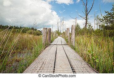 madeira, pântano, dia ensolarado, caminho