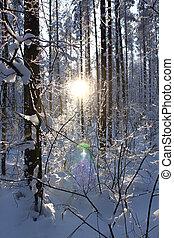 madeira, pôr do sol, inverno