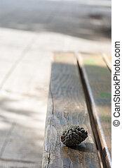 madeira, pinecone, banco parque
