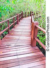 madeira, ponte,  mangrove, floresta, passagem