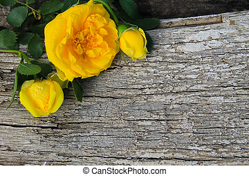 madeira, rosa, fundo amarelo