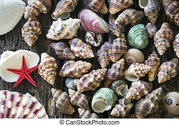 madeira, seashells, lote, fundo