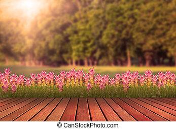 madeira, terraço, e, tulipa, flor, com