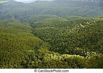 madeiras, árvores
