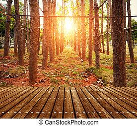 madeiras, em, anoitecer