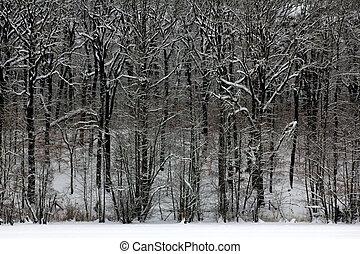 madeiras, inverno, nevado