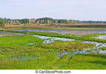 madeiras, polônia, pantanoso, terreno, bialowieza
