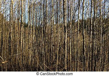 madeiras, textura