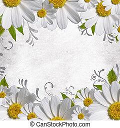 madeliefje, bloemen, grens, met, de ruimte van het exemplaar