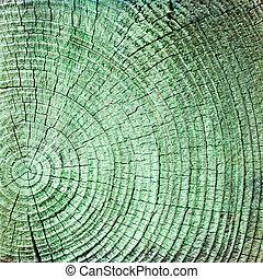 madera, anillos, plano de fondo