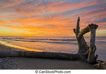 madera flotante, en, un, huron de lago, playa, en, ocaso