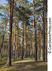 madera, pino