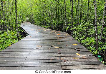 madera, trayectoria, manera, entre, el, mangle, bosque,...