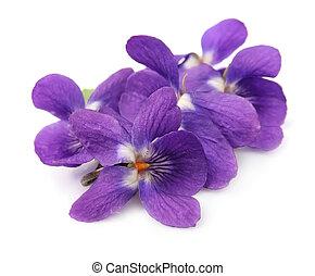 madera, violetas, flores