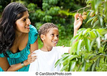 madre e hijo, escoger, litchis