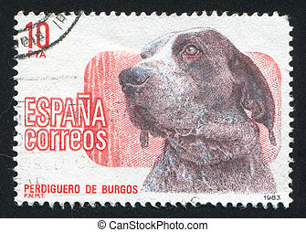 madrid, chien, exposition
