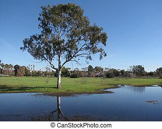 Madrona Marsh - Tree and wetlands in Madrona Marsh,...