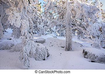 Madryt,  navacerrada, Śnieg, Hiszpania