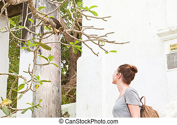 madu, ganga, balapitiya, sri lanka, -, a, woman, aussieht, an, ein, indische , riesig, eichhörnchen