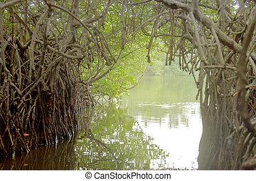 madu, ganga, balapitiya, sri lanka, -, boot, safari, durch, a, mangrovenbaum, tunnel