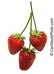 maduro, hojas, aislado, fresas, plano de fondo, tallos, rojo blanco