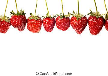 maduro, vermelho, morangos, com, hastes, e, folhas, isolado,...