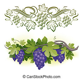 maduro, &, -, videira, ilustração, calligraphic, vetorial, decorarative, uvas