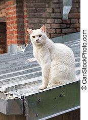 maestro, -, senzatetto, tetto, gatto
