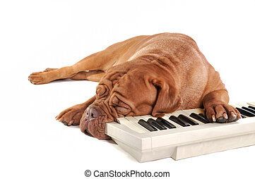 maestro, slapende