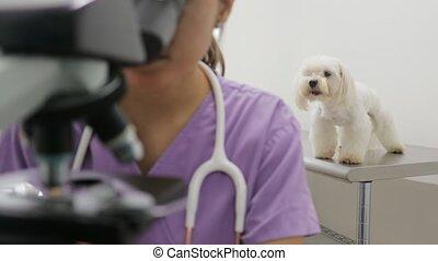 magasin, femme, fonctionnement, chouchou, vétérinaire, clinique, personnel