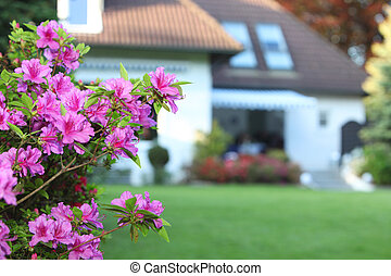 Magenta azaleas in a private garden - Closeup detail of a ...