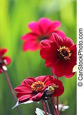 Magenta Flower With Lime Leaves. - Deep dark pink flower set...