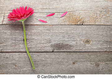Magenta gerbera flower on wooden table with copy space