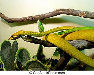 mager, slangen, twee