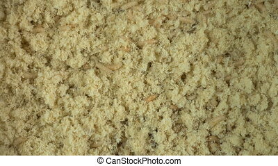 Maggots in sawdust - Footage of maggots in sawdust, close up...