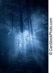 magia, floresta