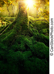 magia, floresta, profundo
