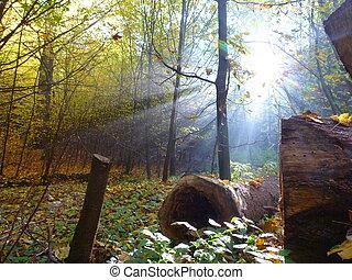 magia, foresta, con, raggio sole, luce