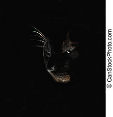magia, gato