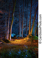 magia, notte, il, foresta