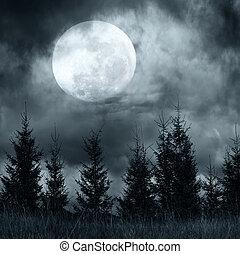 magia, paesaggio, con, albero pino, foresta, sotto, drammatico, cielo nuvoloso
